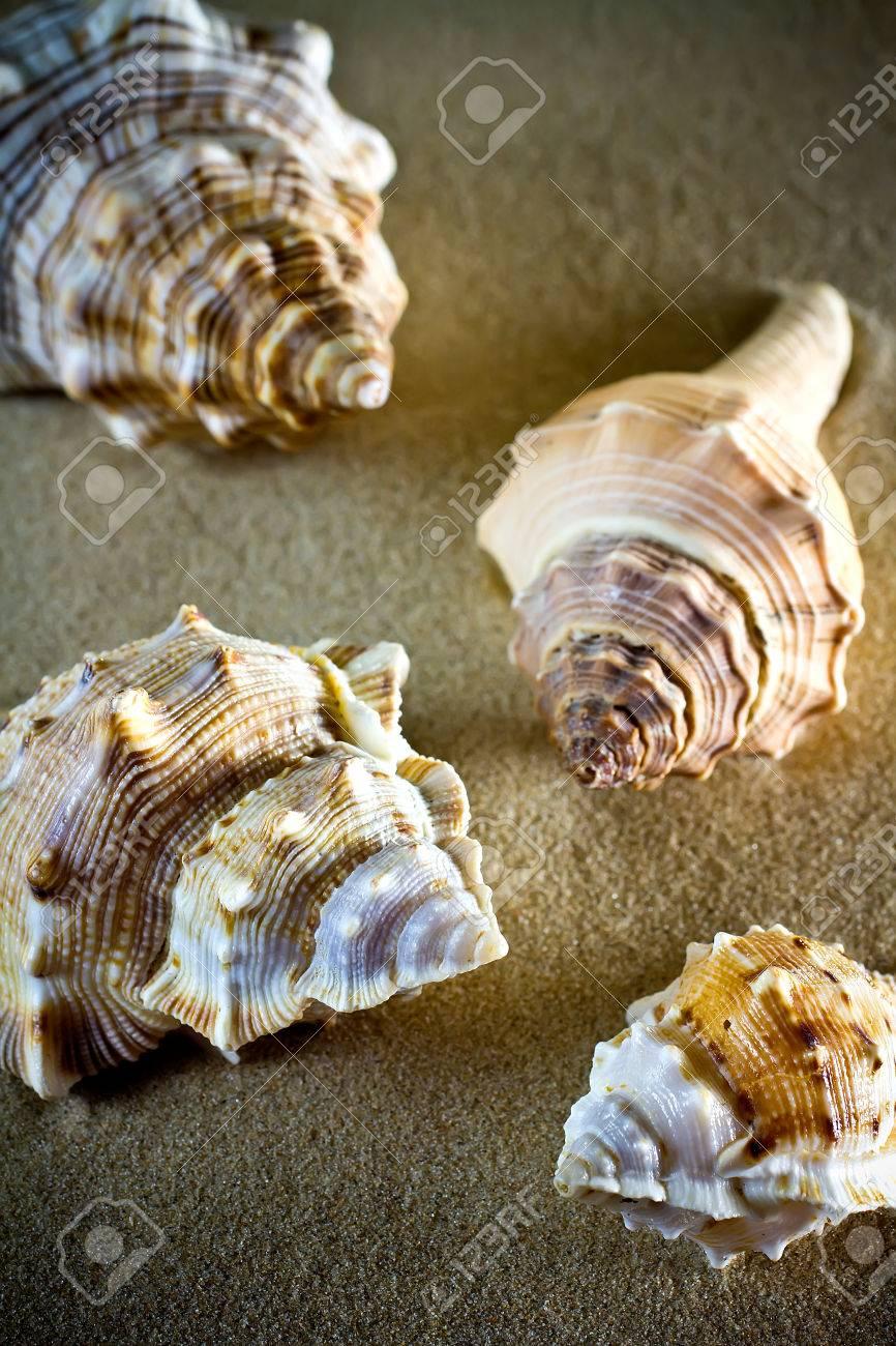Cascaras Del Mar Conchas De Mar Conchas Marinas De La Playa