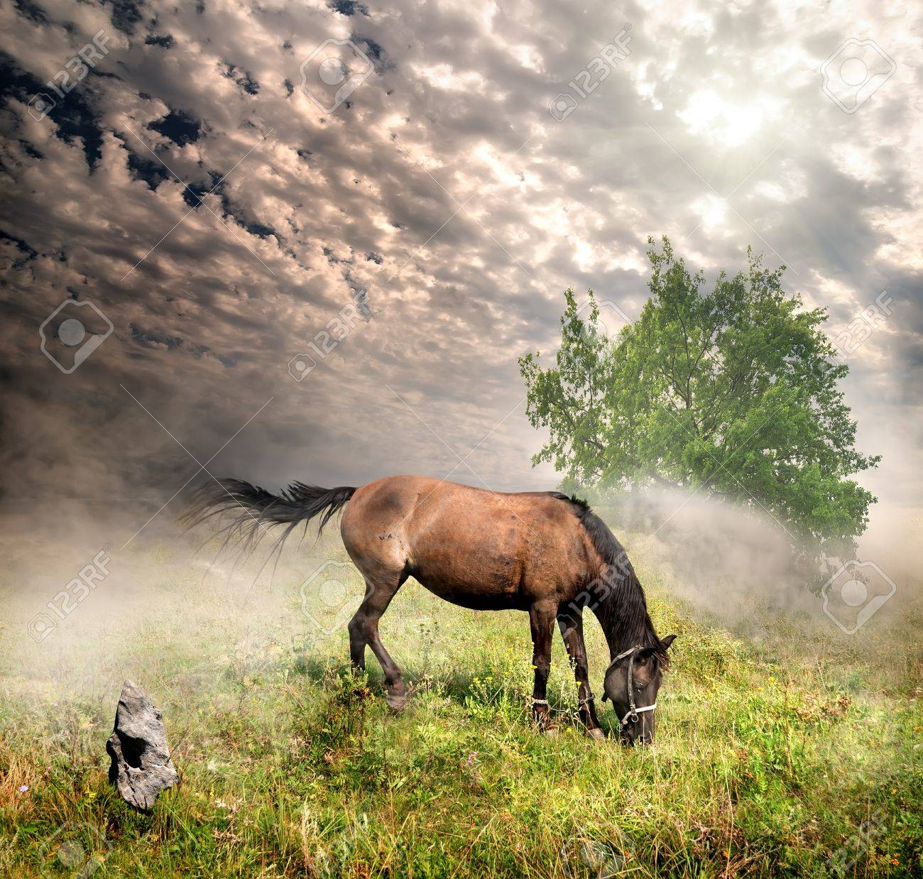 Horse in a meadow on a cloudy day Stock Photo - 21774907