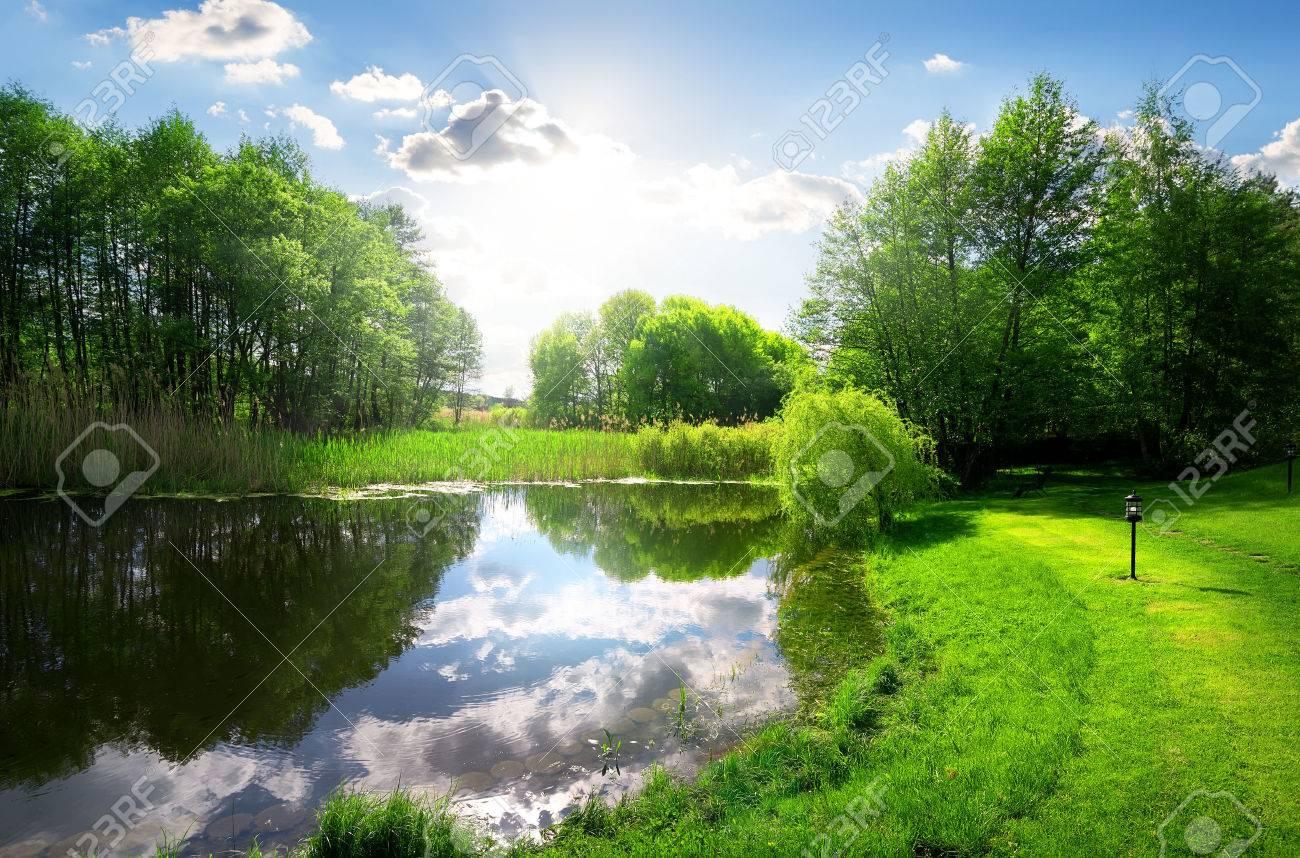 Green park near calm river under sunlight - 48673312