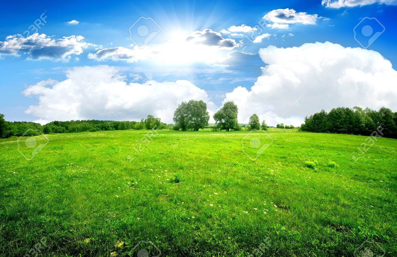 Green lawn and trees under beautiful clouds - 50410086