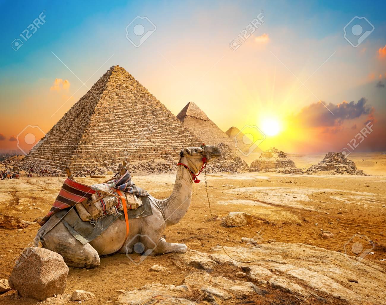 Camel and pyramids - 122413907