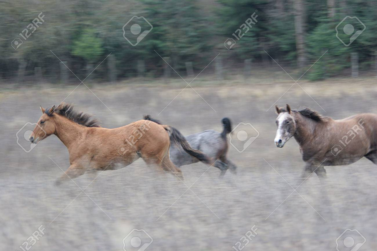 horses running in the field. Stock Photo - 1977139