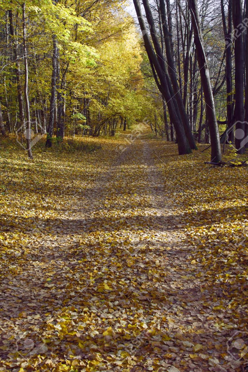 Lane in forest with leafs in the fall poland stock photo picture lane in forest with leafs in the fall poland stock photo 20310964 publicscrutiny Gallery