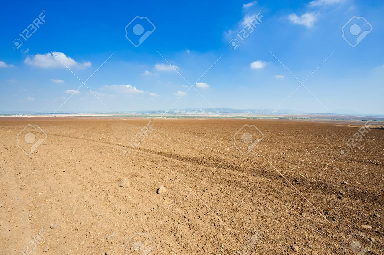 Poor Stony Soil after the Harvest in Israel Stock Photo - 16002236