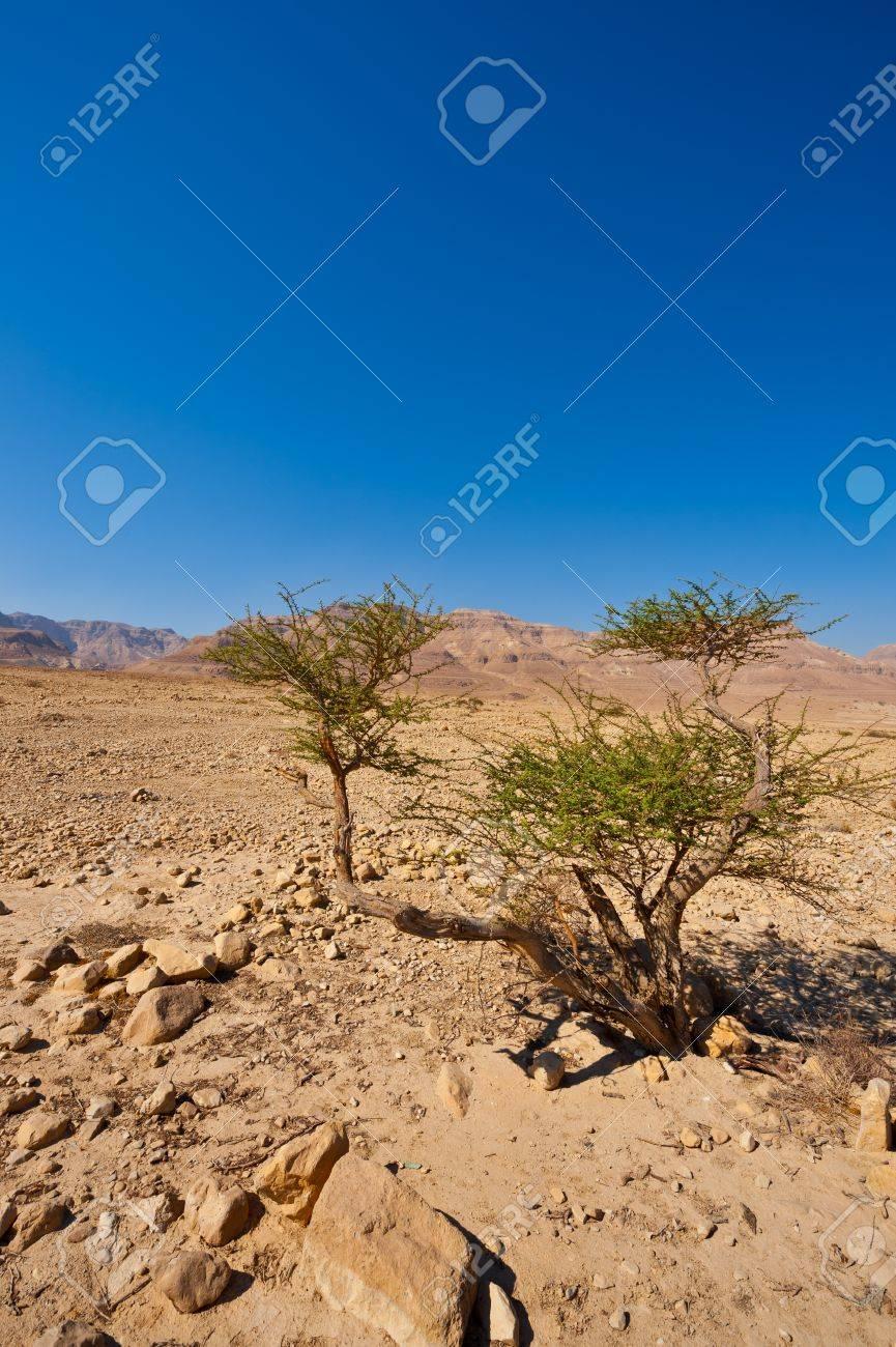 Desert on the West Bank of the Jordan River Stock Photo - 16401418