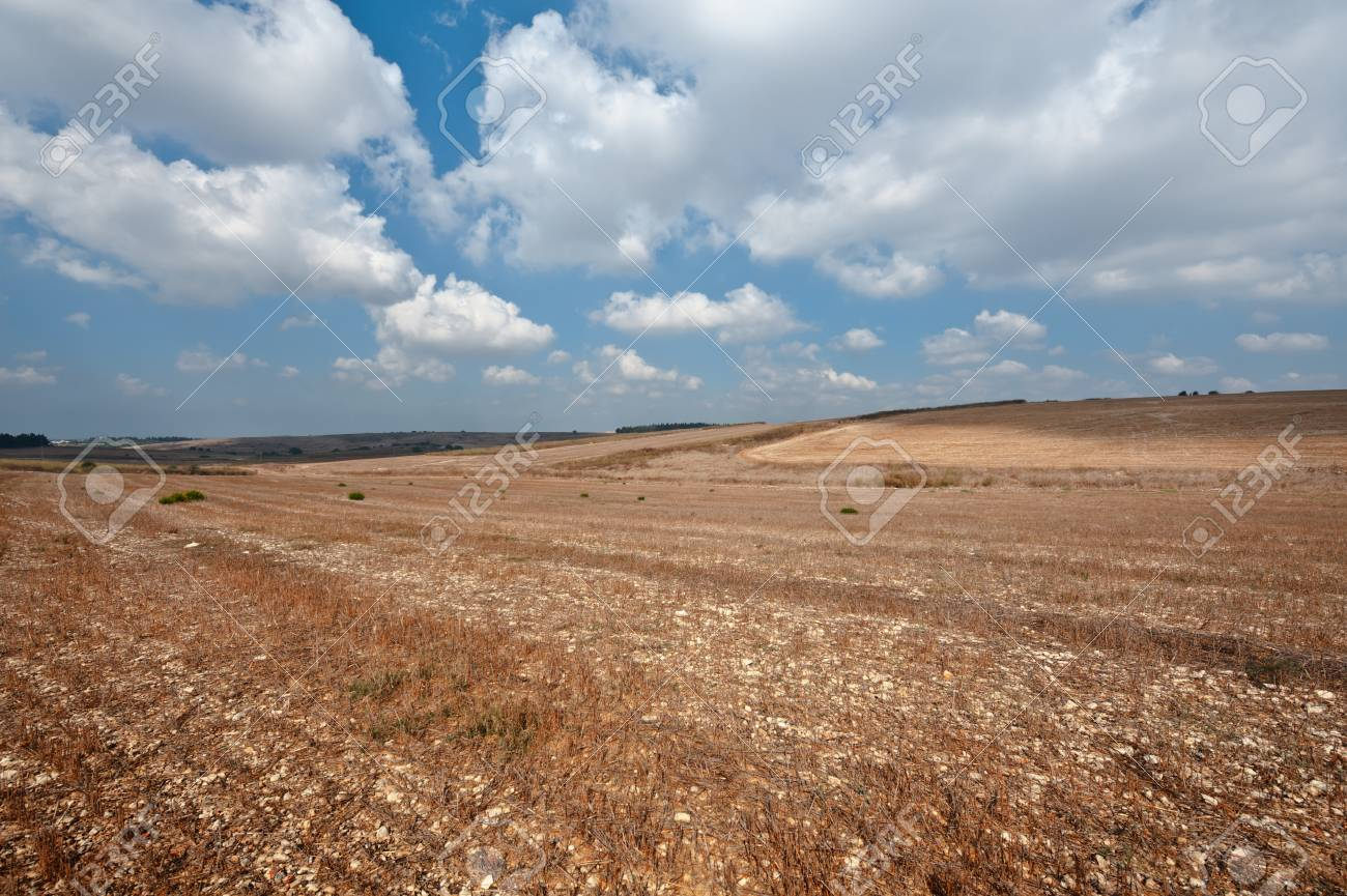 Poor Stony Soil after the Harvest in Israel Stock Photo - 16508448