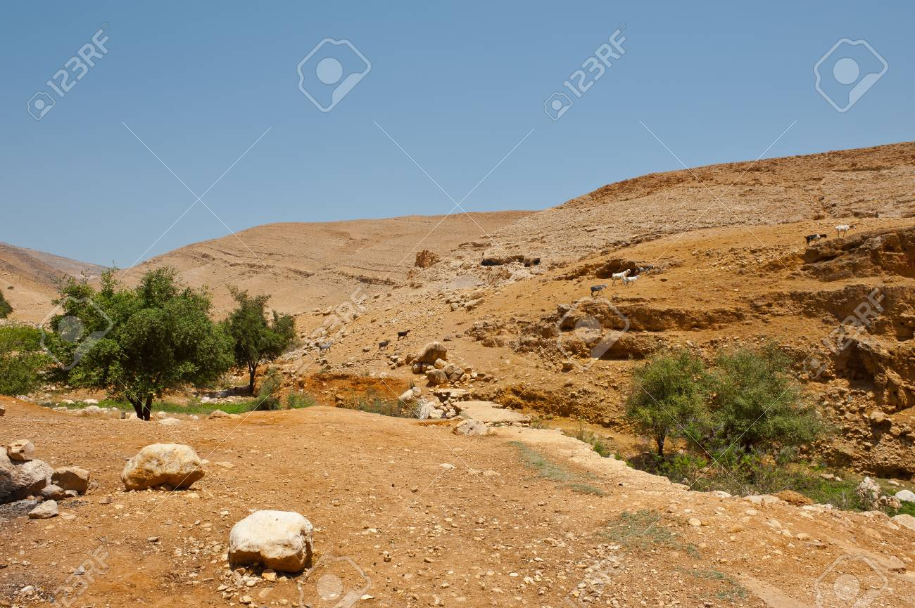 Herd of Goats Grazing in the Mountains of Samaria, Israel Stock Photo - 16857991