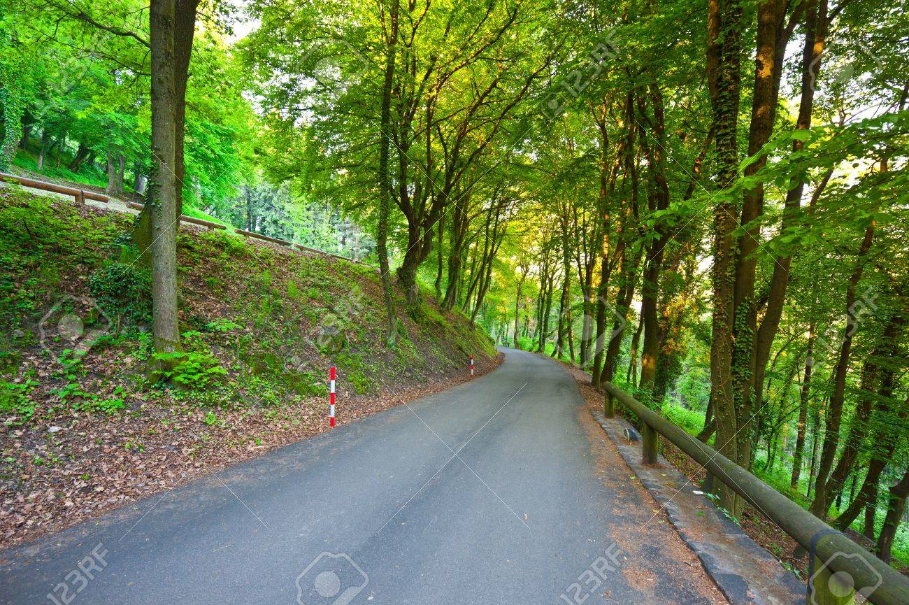 Asphalt  Road in the Forest, Italian Alps Stock Photo - 16990622