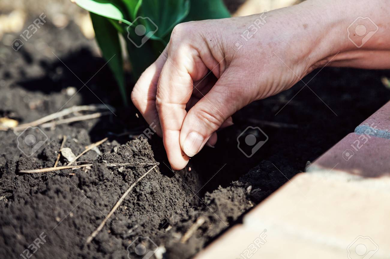 To Sow the Seeds of Earth