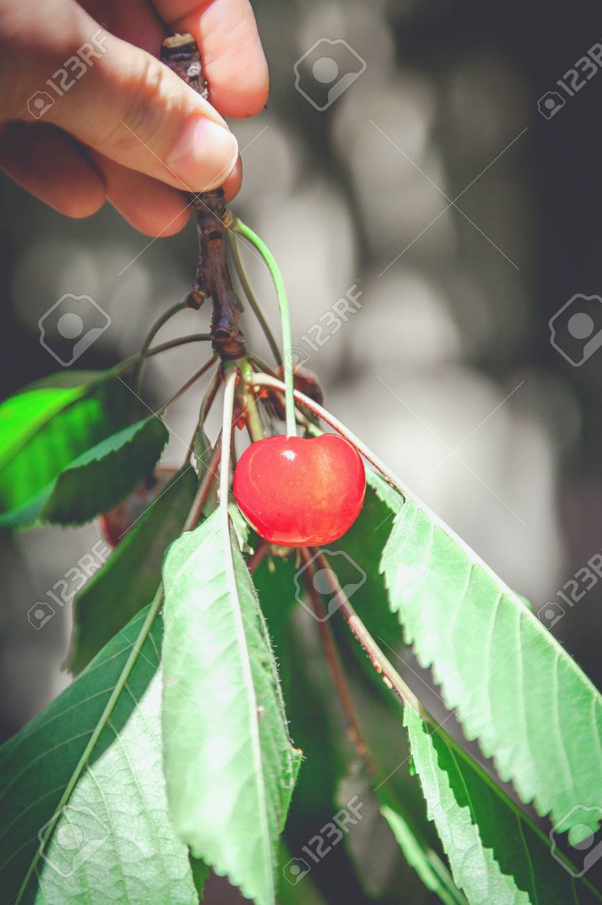 Cherry Torn Nude Photos 1