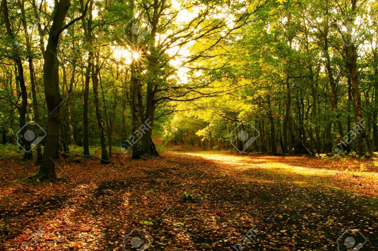 Sunlight through the autumn trees Stock Photo - 10959979