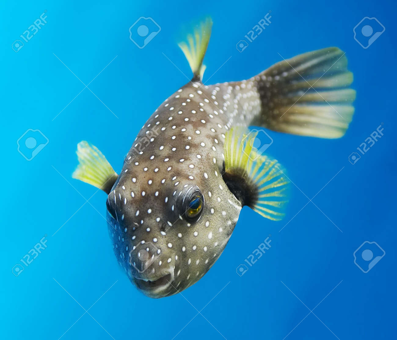 Tropical waters Stock Photo - 584957