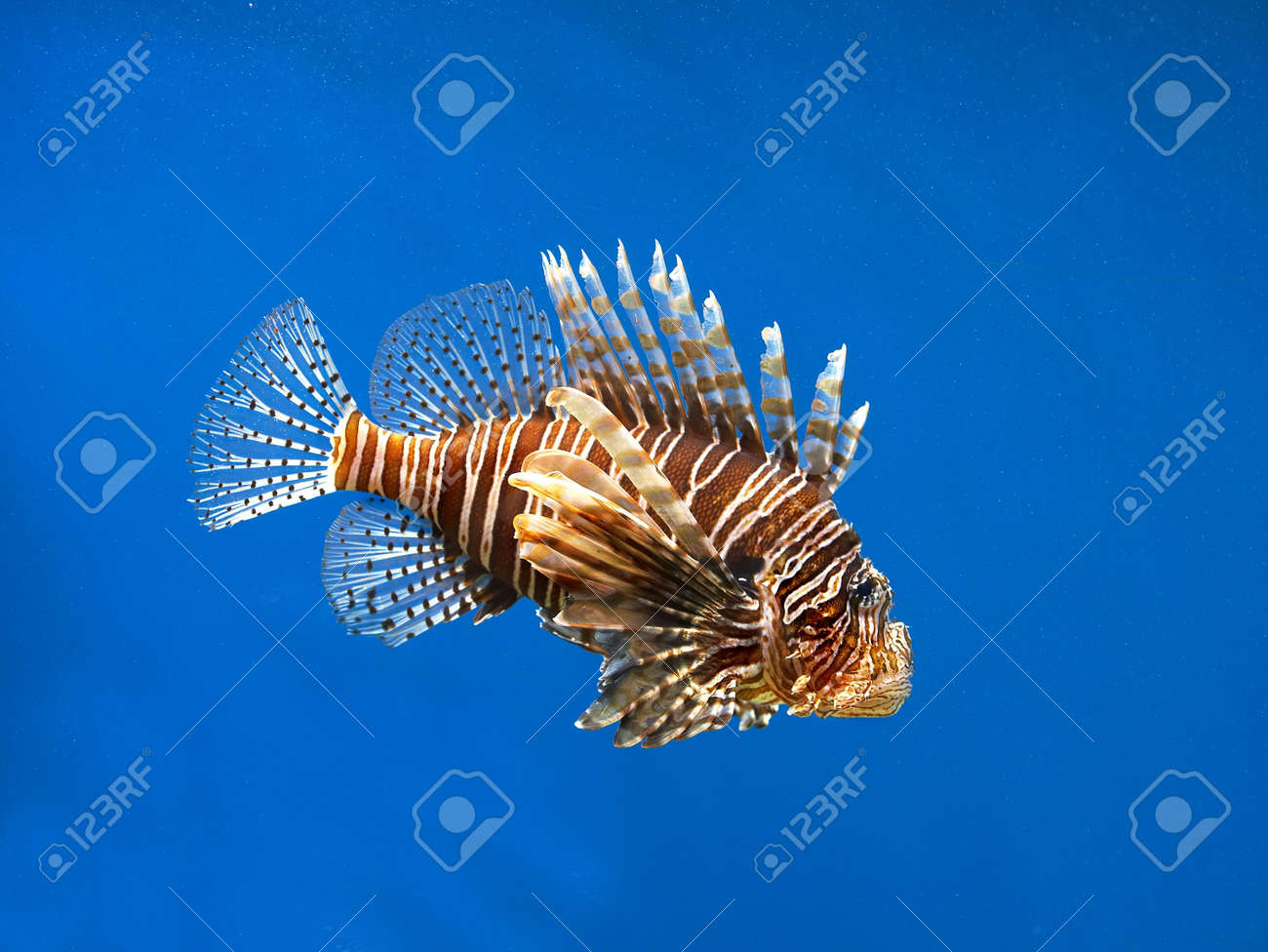 Tropical waters Stock Photo - 589176