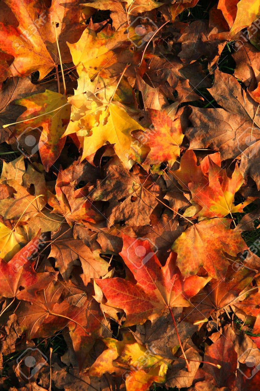 Autumn in the park Stock Photo - 666988
