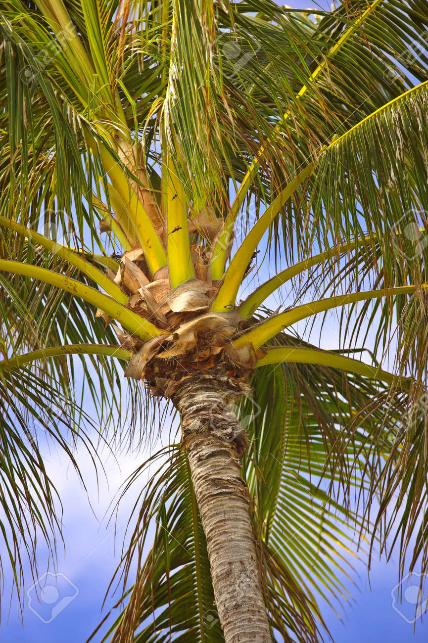 Photo of palms in tropical settings Stock Photo - 740443