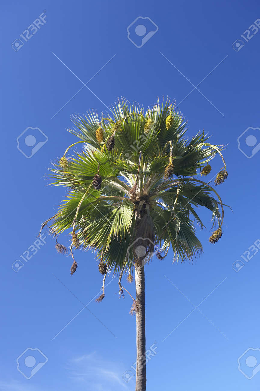 Photo of palms in tropical settings Stock Photo - 737759