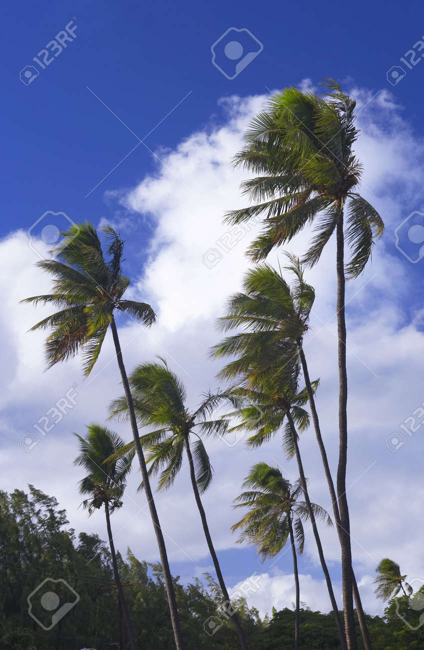 Photo of palms in tropical settings Stock Photo - 774967