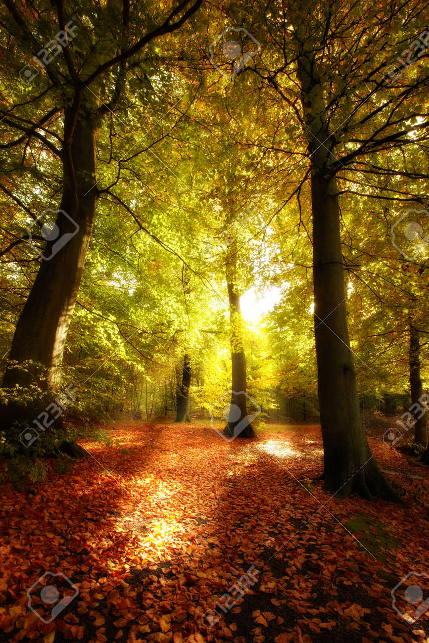 The forest in autumn - colorful Stock Photo - 5143567