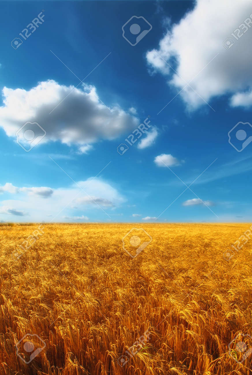 Before harvest - landscape photo from the countryside Stock Photo - 5606466