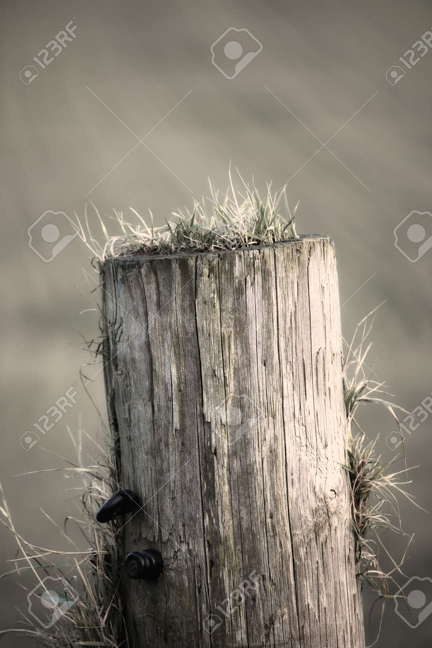 Old pole in winter - gray tones Stock Photo - 6937127