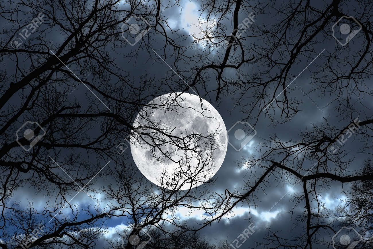 Photo of a the Moon  night and  Creepy Woods Moon