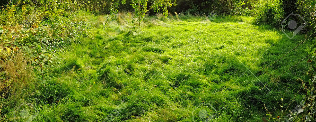 A photo of wet swampland Stock Photo - 17328753