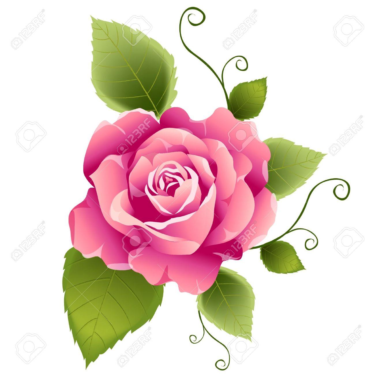 Banque d'images Rose rose de dessin vectoriel