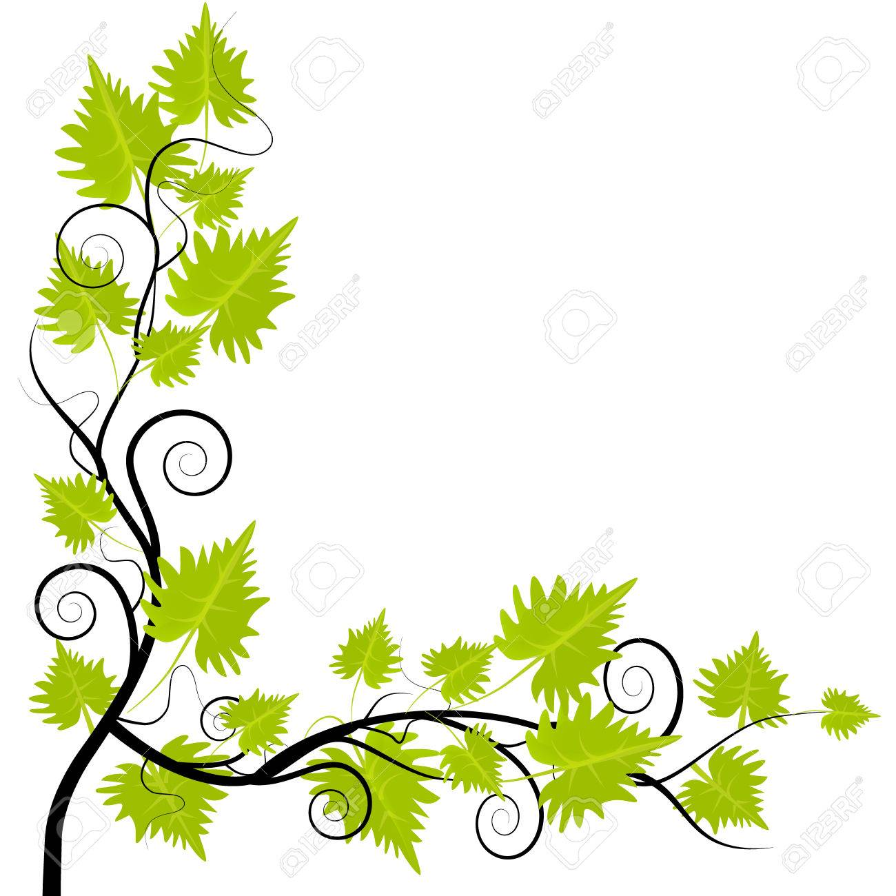 Grapevine leafs frame on white background - 62464623