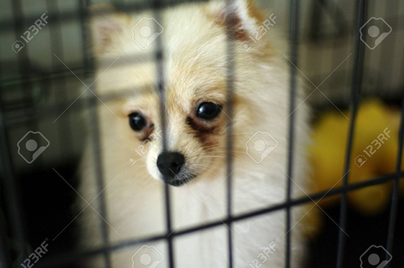dog in cage shelter - 24086771