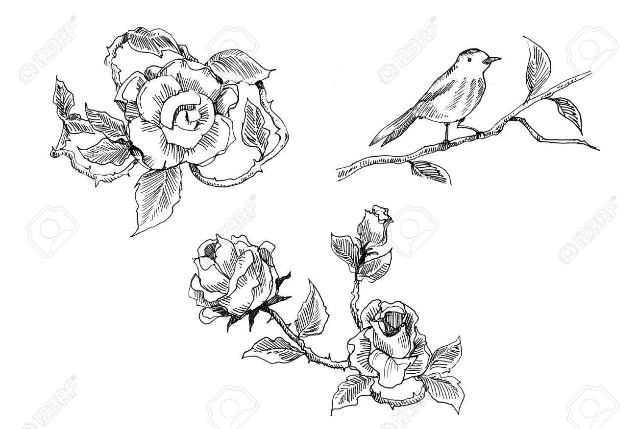 Rose Vintage Et Oiseau Dessin à La Plume De Doodle