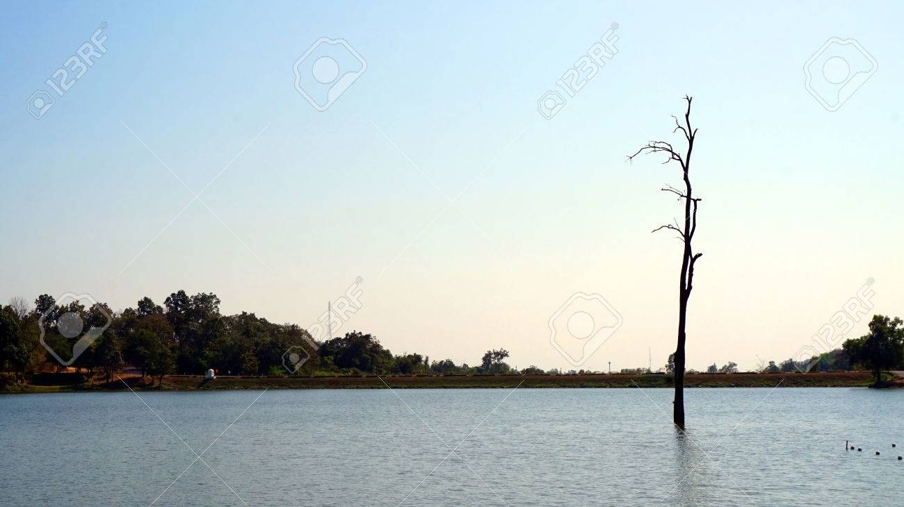 Alone Abstract Concept, Dead Tree In The Middle Of Lake In The.. Stock  Photo, Picture And Royalty Free Image. Image 43696216.