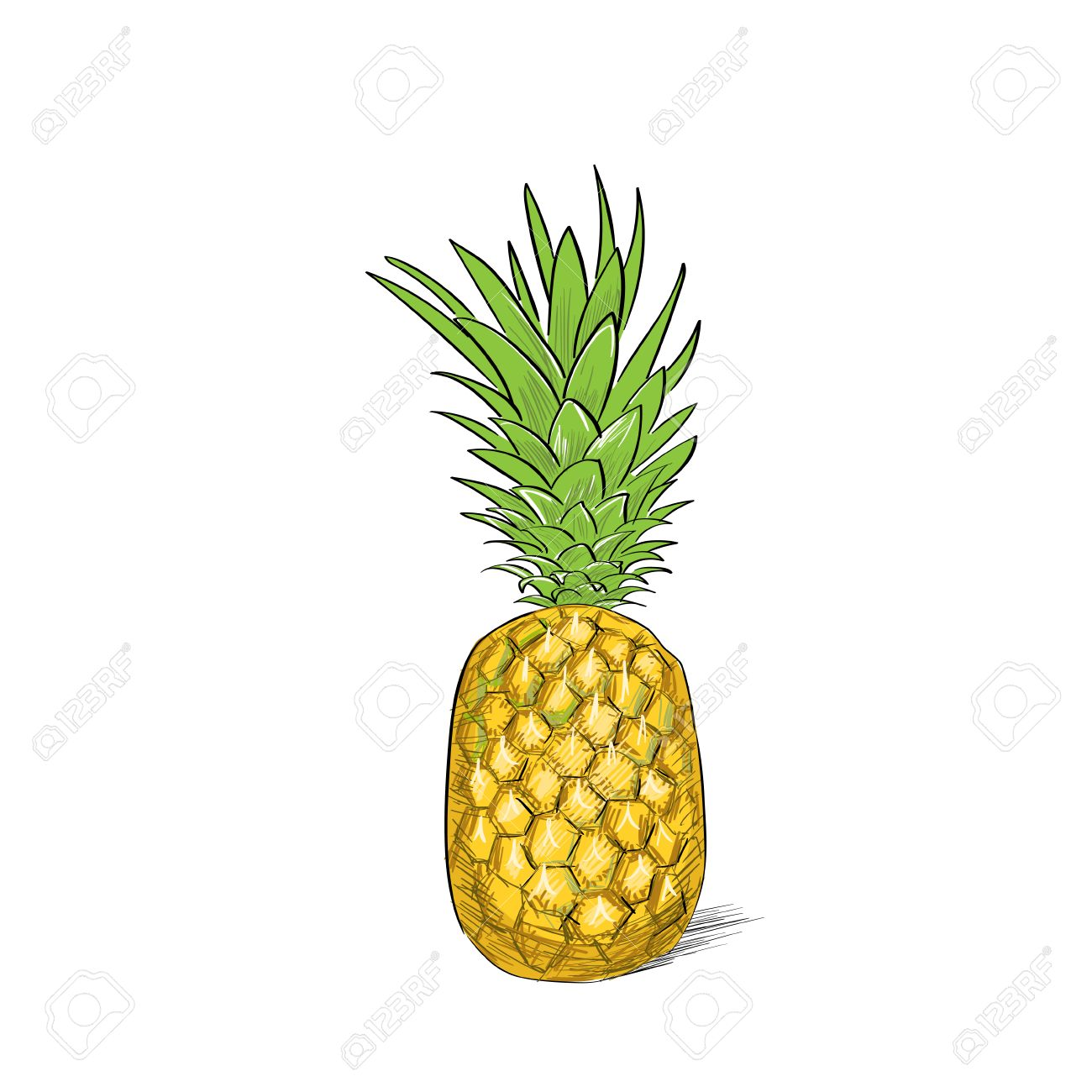 Uncategorized Pineapple Picture To Color pineapple fruit color sketch draw isolated over white background stock vector 37887568
