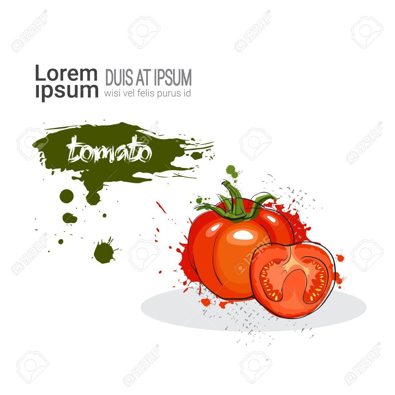 トマト水彩野菜コピー スペース ベクトル イラスト白背景に手書きします