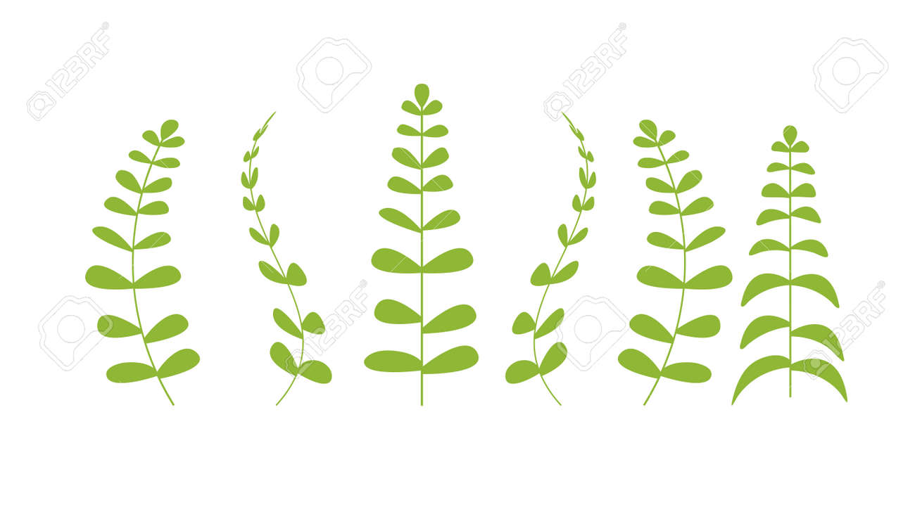 botanical floral set green plants branches with leaves realistic herbs collection horizontal vector illustration - 146041403