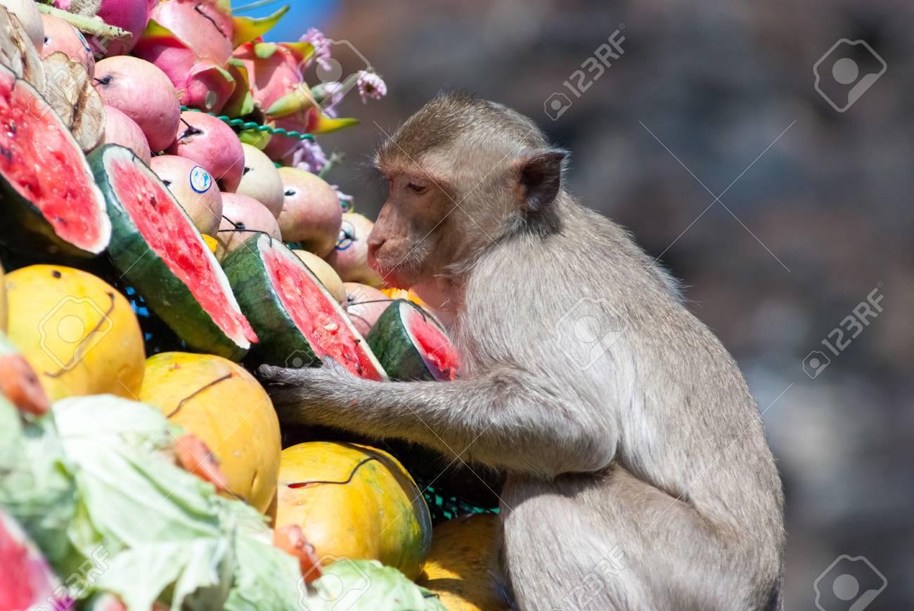 Dieta mono fruta