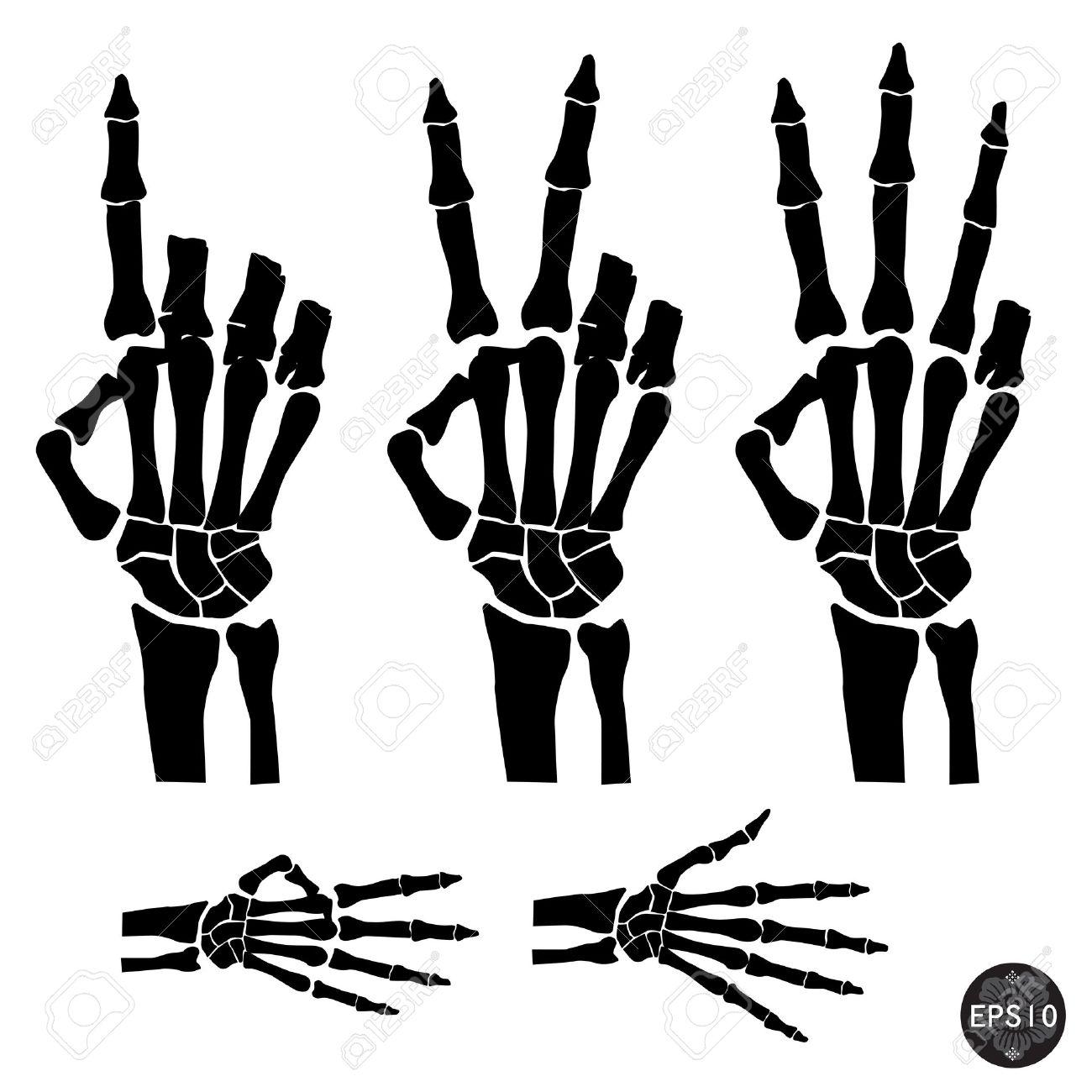Esqueleto De La Mano Muestra El Número De Dedos, Halloween, Vector ...