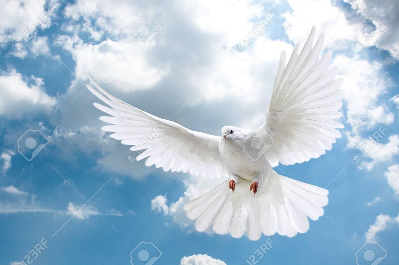 Palomas Blancas Volando En El Cielo De Fondo Fotos Retratos