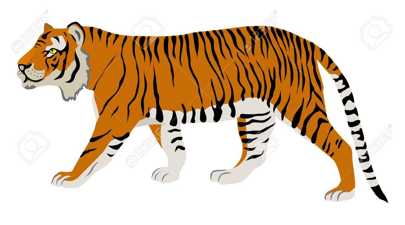 tiger Stock Vector - 2109941