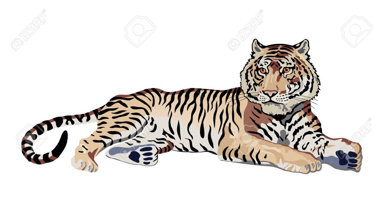 tiger Stock Vector - 2470846