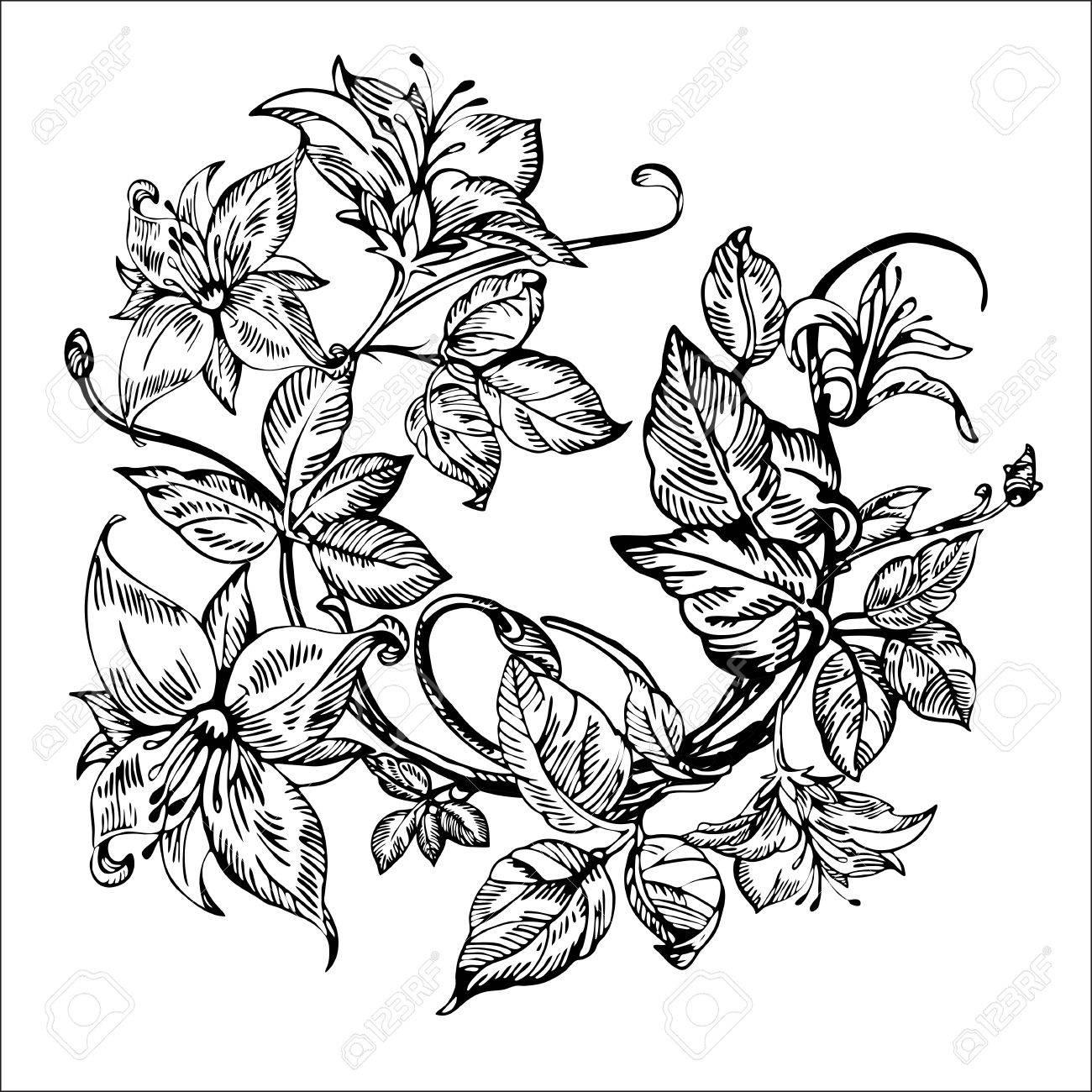 Jahrgang Eleganten Blumen Schwarz Weiss Vektor Illustration