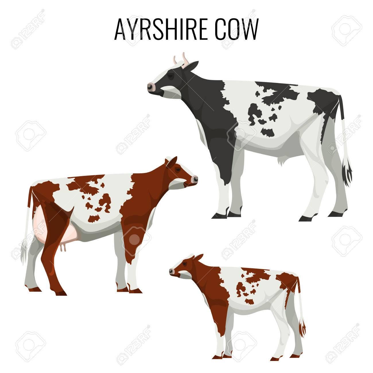 エアーシアの牛白で隔離乳牛のベクトル イラストのイラスト素材
