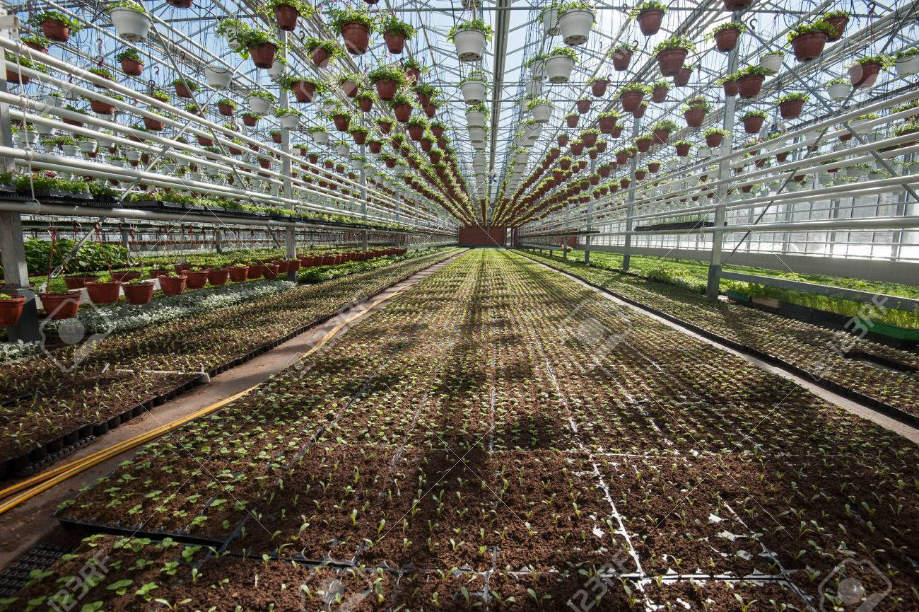 Multi-level Greenhouse Isolated From Low External Temperatures ...