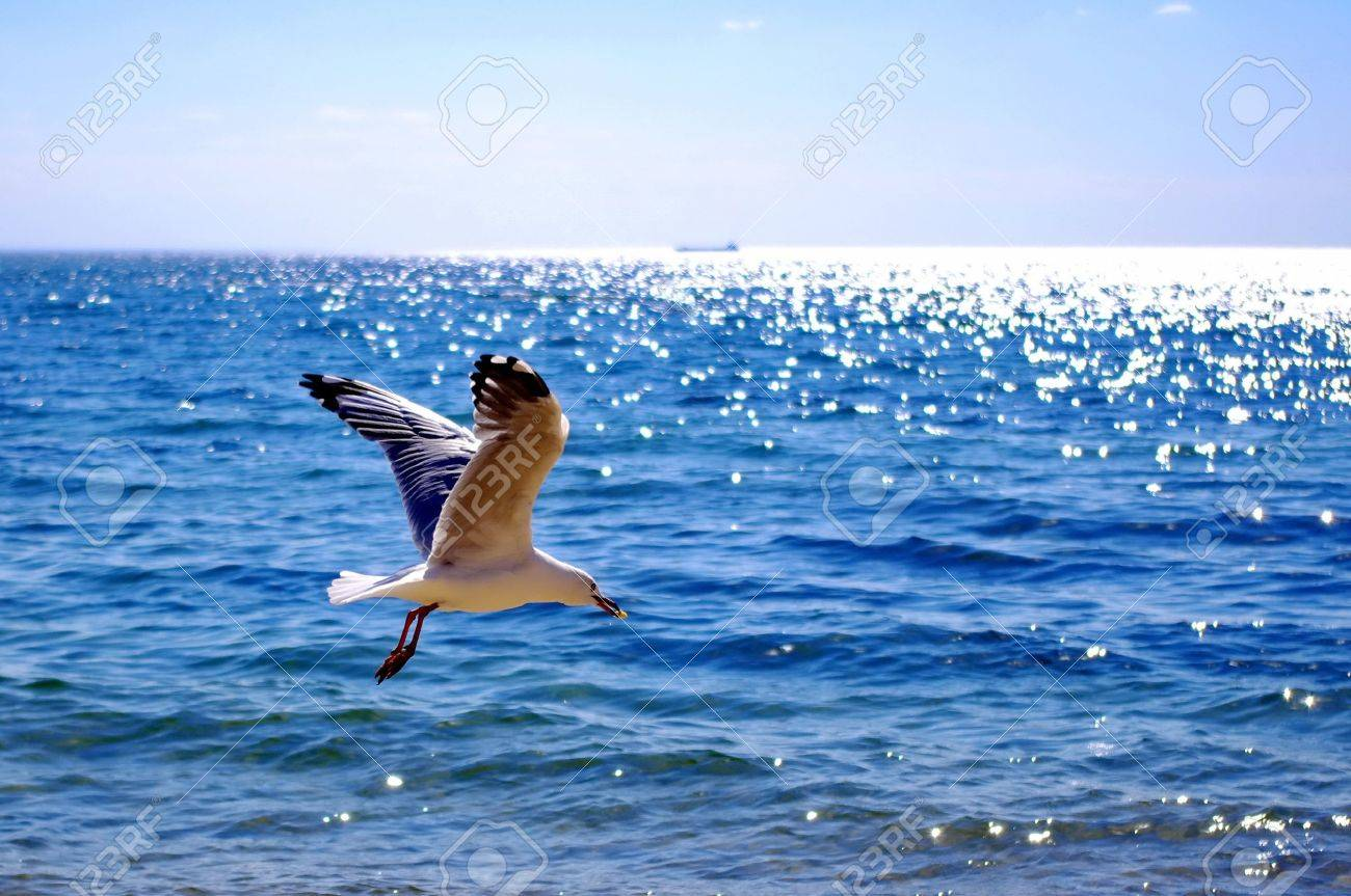Flying sea gull with food Stock Photo - 9004708