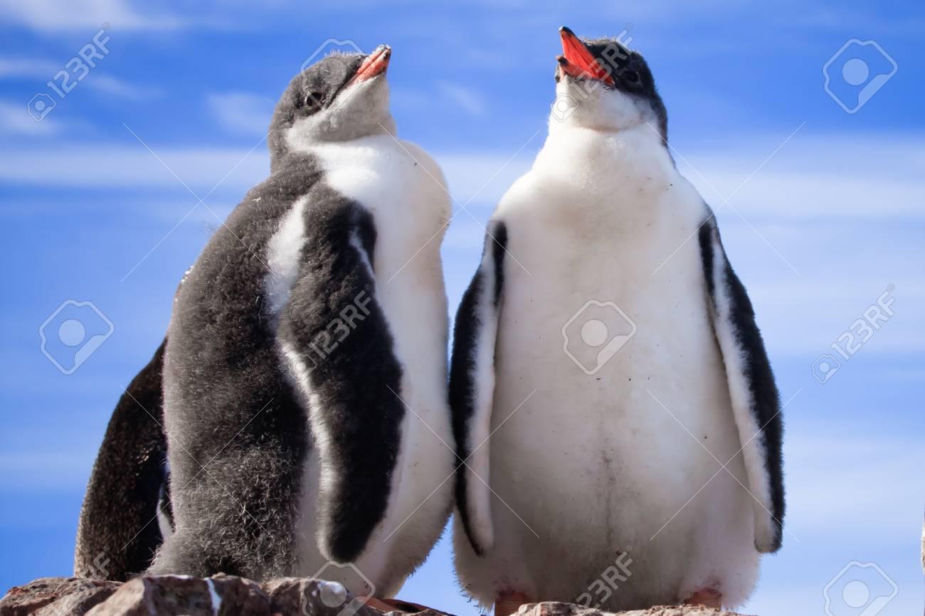 two penguins in Antarctica Stock Photo - 8479736