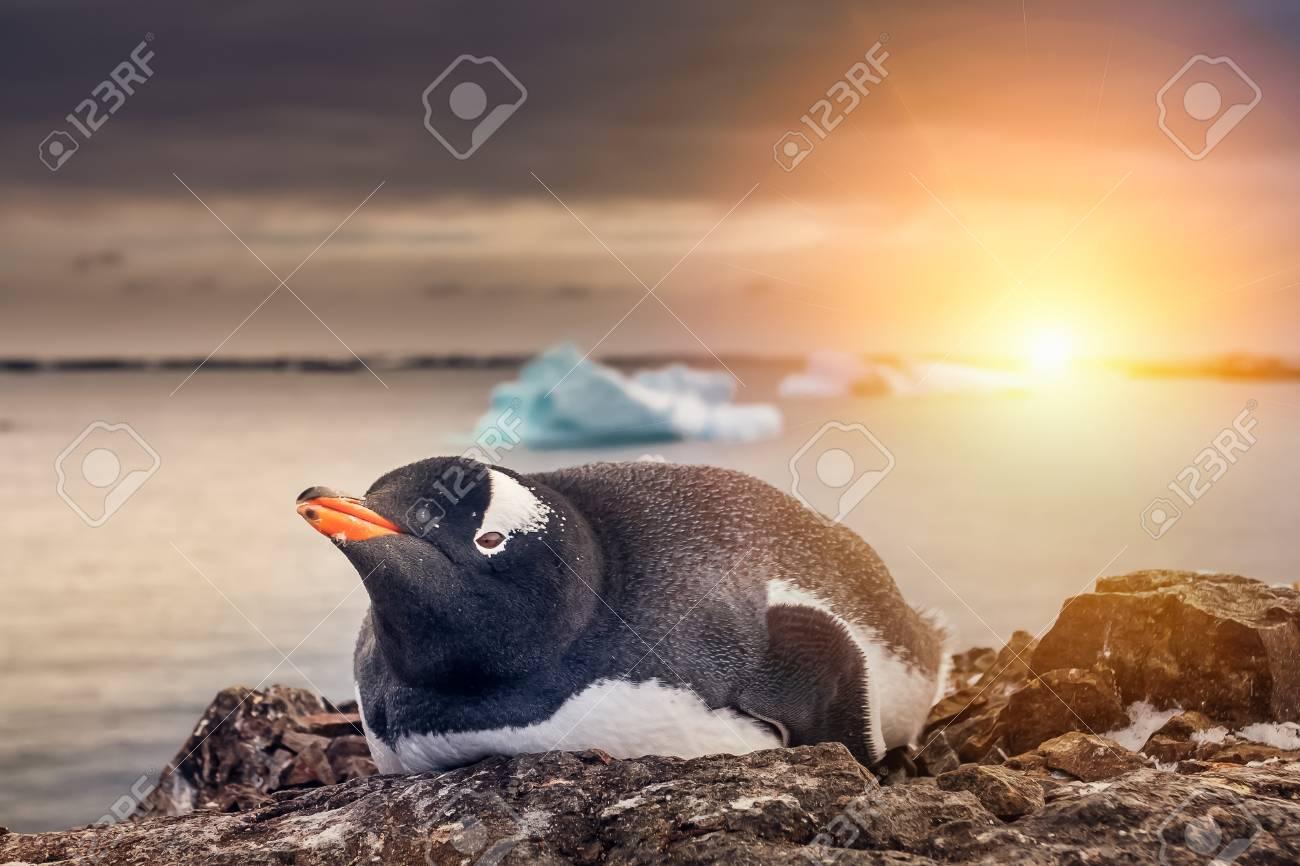 黒と白のペンギンが岩の上に休ん...