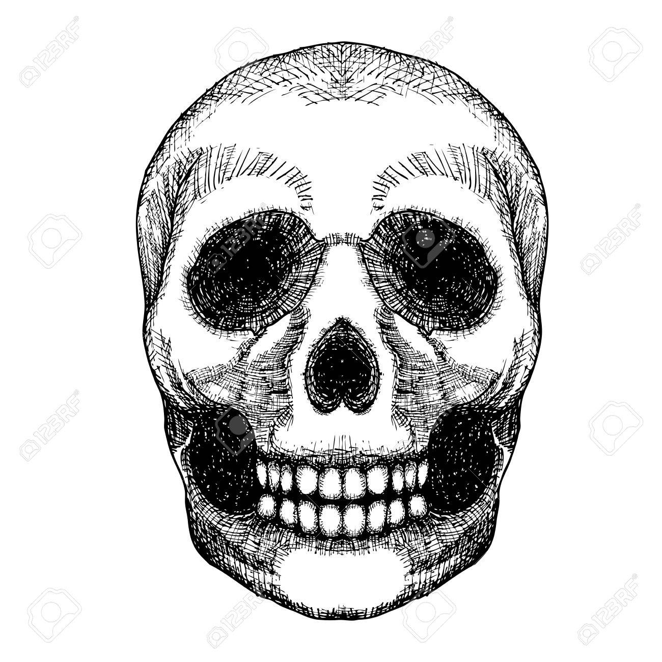 hand drawing skull human skull sketch black and white illustration of skull with a