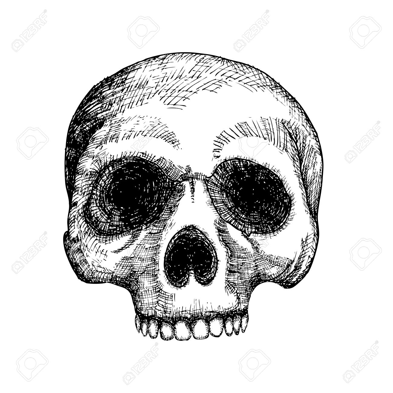 Hand drawing skull human skull sketch black and white illustration