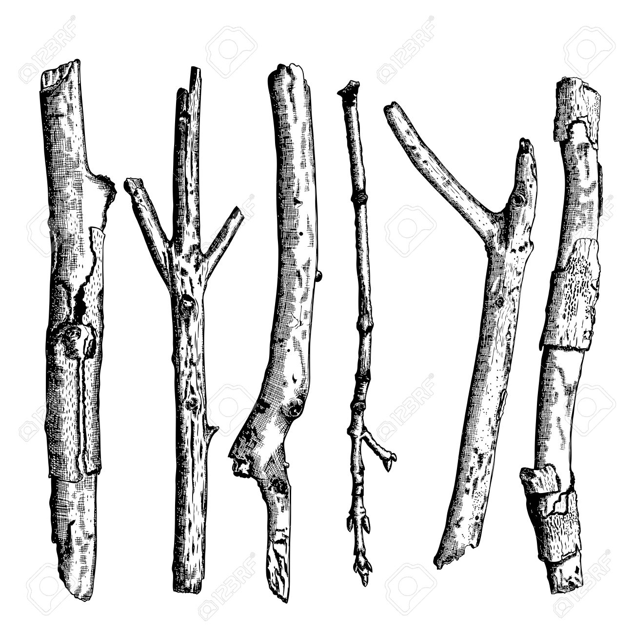 set of detailed and precise ink drawing of wood twigs forest