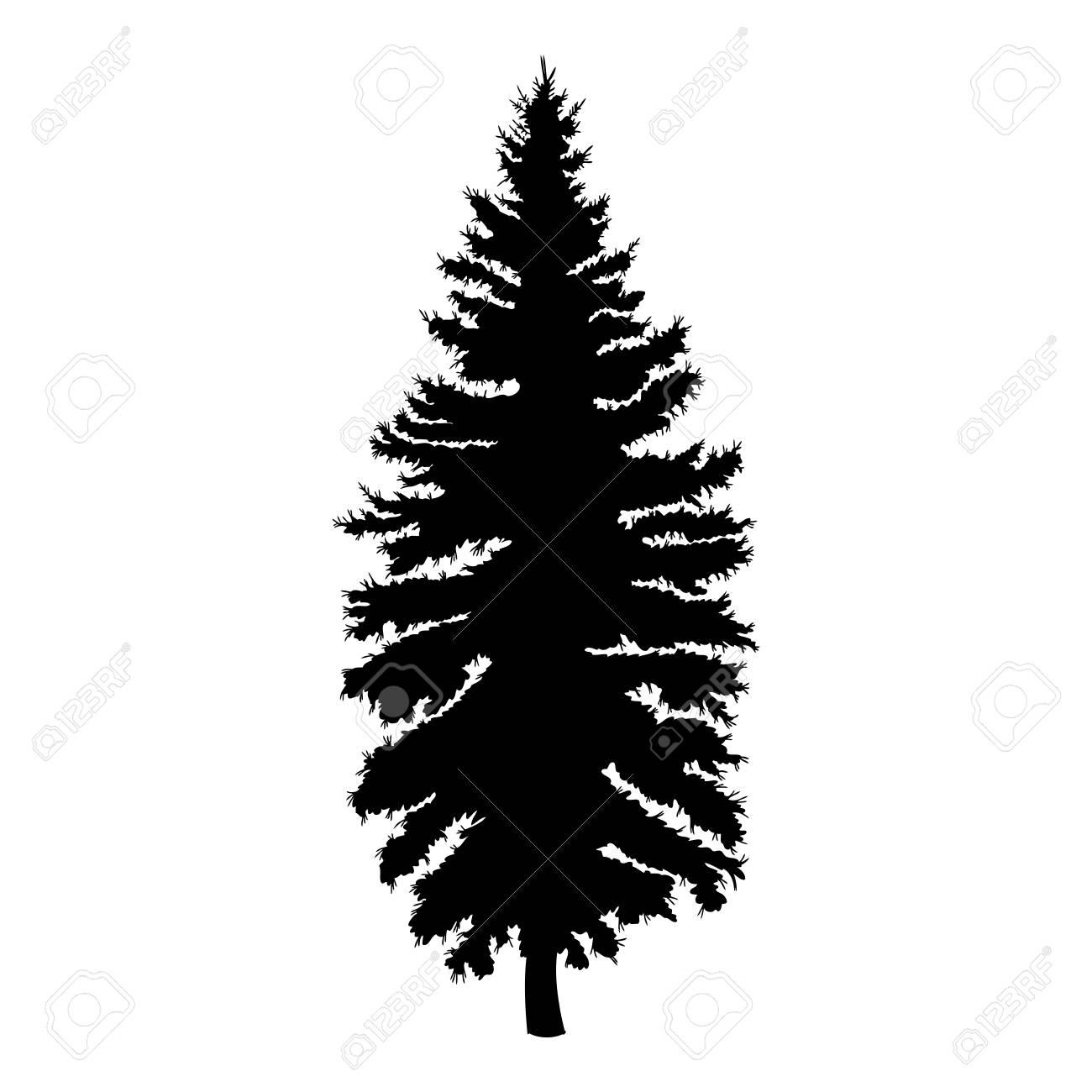 Hand Drawn Fir Tree Vector Illustration Silhouette Of Black