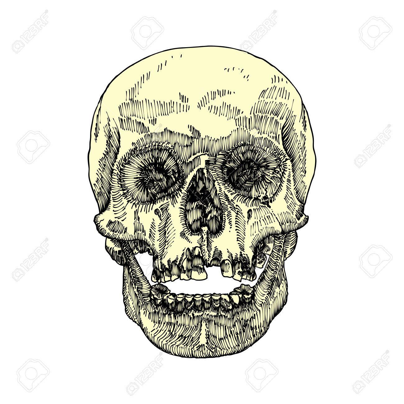 Atemberaubend Anatomie Des Mund Und Rachen Fotos - Menschliche ...